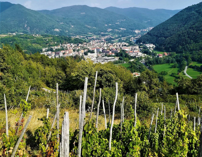 Sentiero del Vino Ramìe