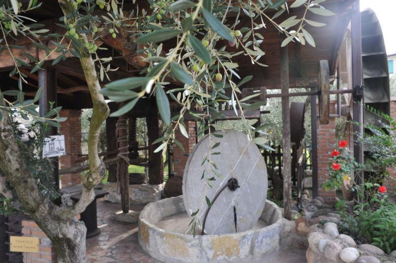 4 passi tra gli olivi e le vigne del Garda