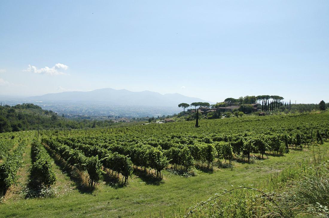 La Festa della Vendemmia delle Strade del Vino dell'olio e dei Sapori di Toscana