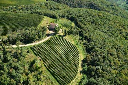 Monte Zovo, esperienze oltre il vino
