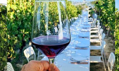 Pranzo in Vigna al Ciabot Del Roero