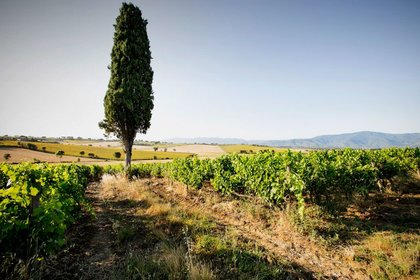 Degustazioni d'estate a Tenimenti d'Alessandro