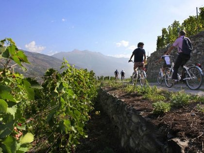 Excursions in taste: Food and wine moving between nature and history