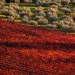 Dopo la vendemmia, in Umbria c'è il foliage della vite del Sagrantino