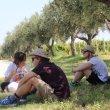 Nasce ufficialmente il Movimento Turismo dell'Olio Abruzzo