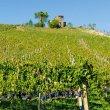 Il Taurasi Docg Riserva Vigna Cinque Querce 2007 premiato al Merano Wine Festival