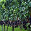 Giornate del Pinot Nero 2019