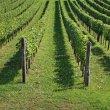 Langa di Barolo: il gustoso cuore del Piemonte
