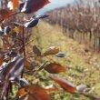 25 anni di festa per il vino simbolo di Breganze