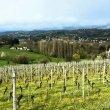 Enogastronomia dell'Alto Monferrato